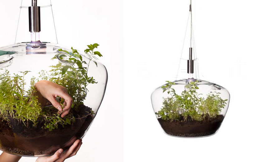 Kristýna Pojerová's Glasshouse Pendant Lamp, Kristýna Pojerová, Glasshouse Pendant Lamp, Terrarium Lamp, Hanging Terrariums, Growing Lamps