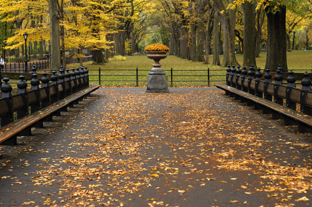 Benches lining the Mall in Central Park. Image © Flickr user Ralph Hockens