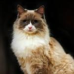 Algonquin Hotel cat