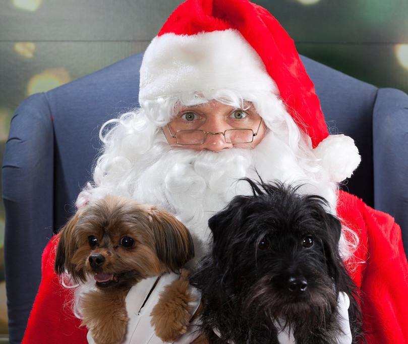 santa, holiday, christmas, pets, staten island