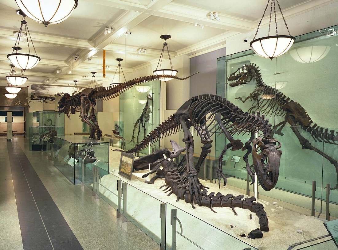 American Museum of Natural History fossil hall