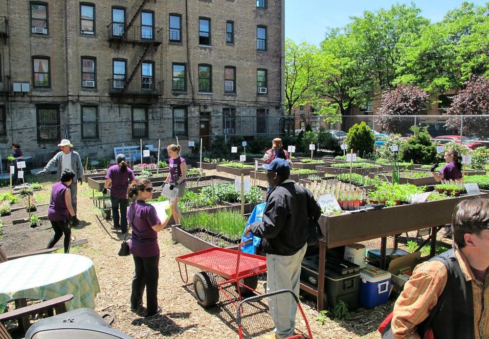 Hattie Carthan Community Garden