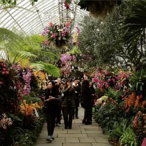 #orchidshow #orchidNYBG #newyorkbotanical garden #bronx #flowers