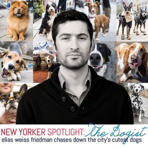 We chat with the human behind @thedogist about what it's…