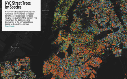 MAPS by Jill Hubley Explore NYC Street Trees by Species