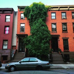 This tree is growing a multi-million dollar townhouse #fortgreene #spring…