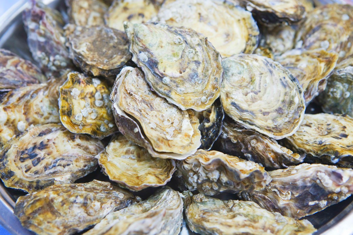 Live Oysters Underwate...
