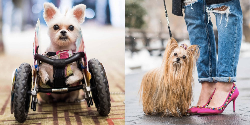 elias weiss friedman, the dogist, the dogist tumblr, give a dog a bone