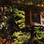 Dan Hisel, mirrored sauna, Cadyville Sauna, Cadyville, blend in the forest, cedar wood,