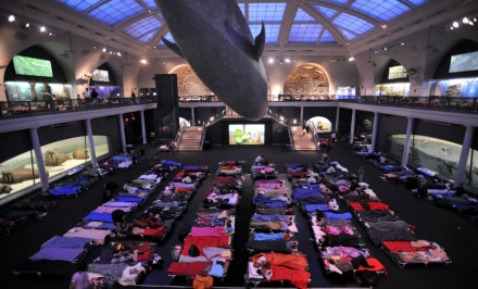 natural history museum under the whale sleepover