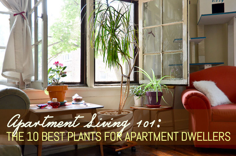 Apartment Living 101 The 10 Best Plants For Apartment
