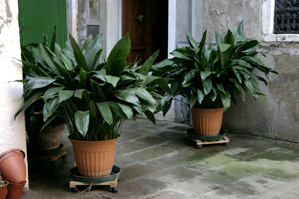 Apartment living 101 the 10 best plants for apartment for Low maintenance air purifying plants