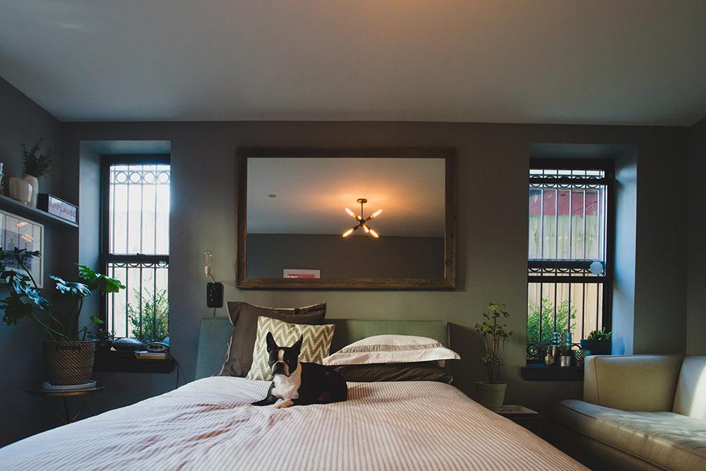 boston terrier on bed
