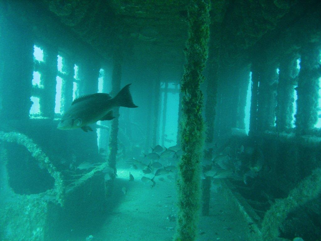 NYC subway cars, subway car reefs, artificial reefs, subways being dumped in the ocean, nyc subway car reefs