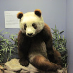 su lin, baby panda nyc, ruth harkness