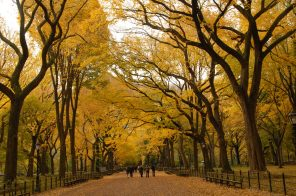 The best places in Central Park to see fall foliage
