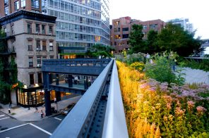 The High Line will reopen next week with timed-entry reservations