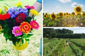 8 pick-your-own flower farms near New York City